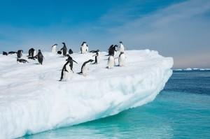 Antarctica-Penguins-Ice
